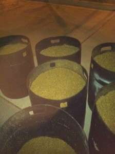 One batch of spent grain